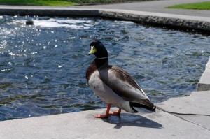 Autour de l'étang