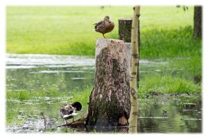 L'étang d'une pluie