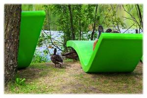 Petit canard curieux