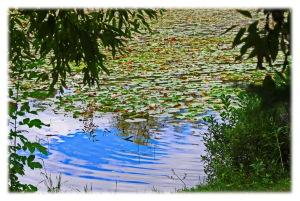 lac des nénuphars