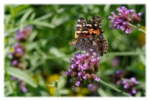 Le papillon voyageur