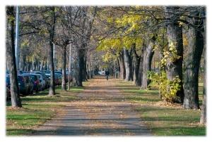 Route des feuilles