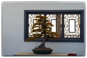Trois petits arbres zen