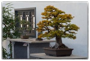 Petits arbres zen
