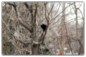 L'oiseau triste imaginaire